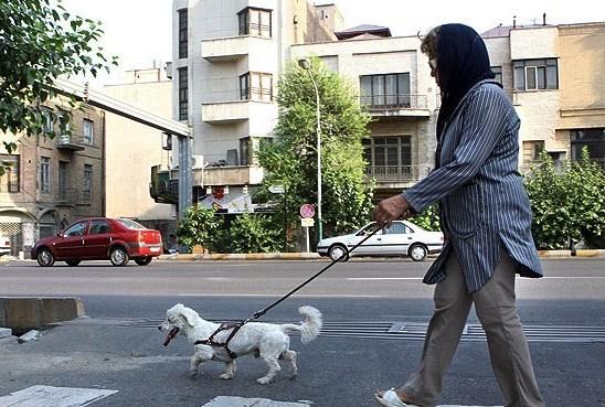 تقلید از فرهنگ غرب با سگ گردانی/ خودنمایی و تفریح برخی جوانان با سگ ها!