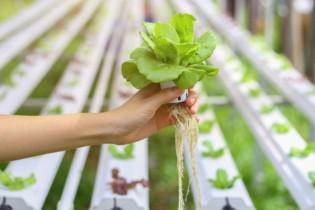 تکنولوژی جدید کاشت میوه و سبزی بدون خاک