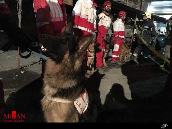 سگ های زنده یاب کسی را زیر آوار پلاسکو پیدا نکرده اند